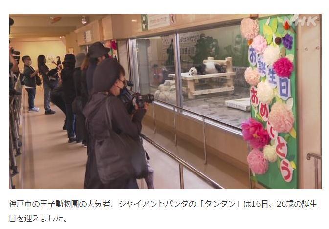 """16日,旅居日本神户市王子动物园的大熊猫""""旦旦""""迎来26岁生日,当地民众前往动物园参观。图片来源:日本放送协会(NHK)报道截图"""