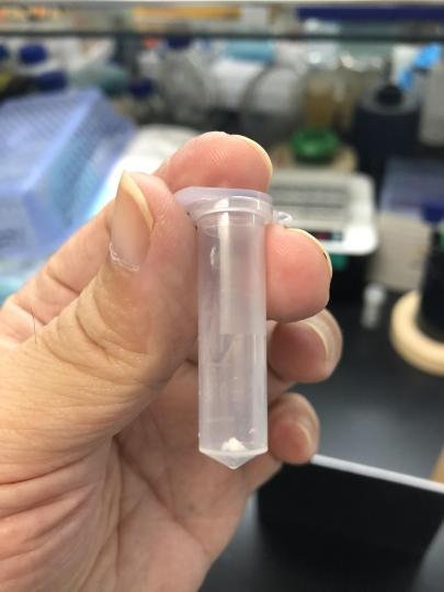 中科院天津工业生物技术研究所科研人员在实验室展示人工合成淀粉样品。 中科院科技摄影联盟 供图