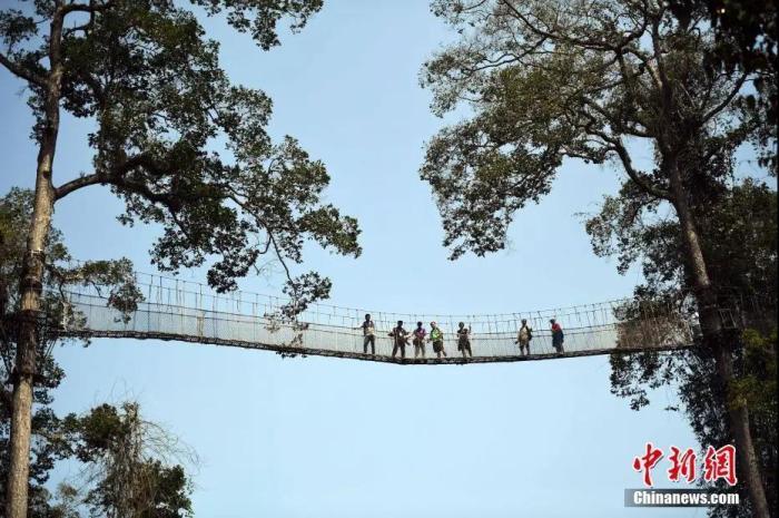 西双版纳望天树空中走廊吸引游客体验。<a target='_blank' href='http://bipolarintervention.com/'>中新社</a>记者 李进红 摄