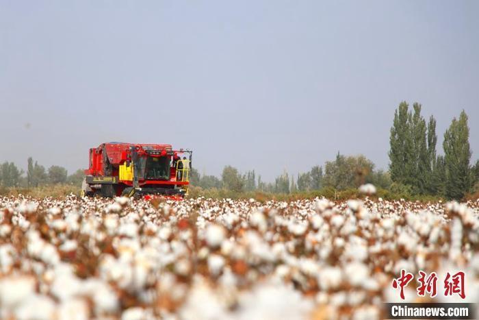 """新疆棉农:我们的幸福像""""花儿""""一样"""