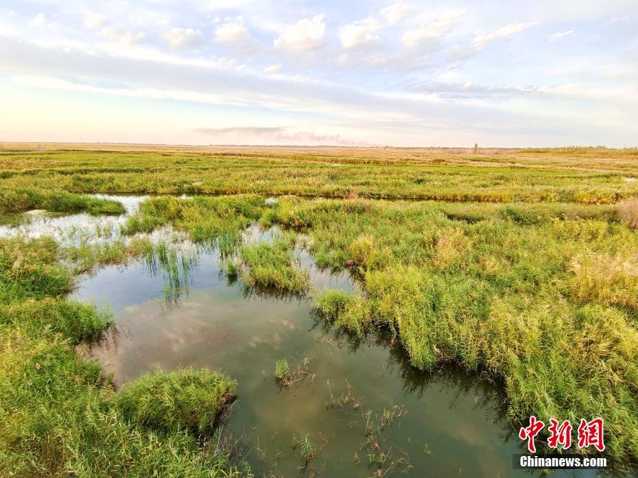 新疆玛纳斯湿地展现金秋韵味