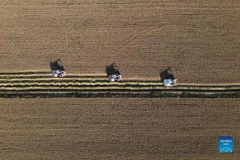 Farmers embrace harvest in north China