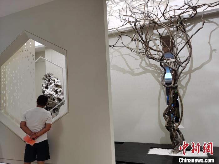 有近五百年历史的文藤的分株被栽种在西馆中。 钟升 摄