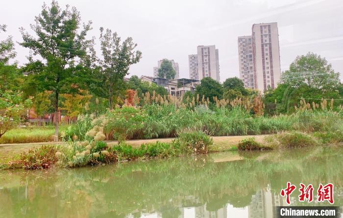 """擦亮绿色生态城市名片,千年古运河""""穿紫河""""焕新常德记忆"""