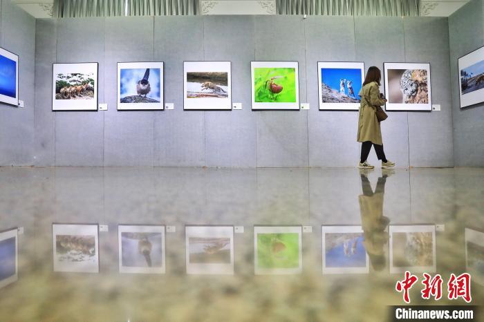 图为展览现场。 李雪峰 摄